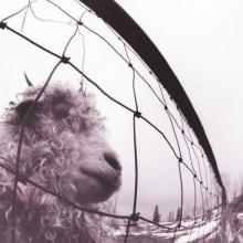 Vs. - 180 gr - de Pearl Jam